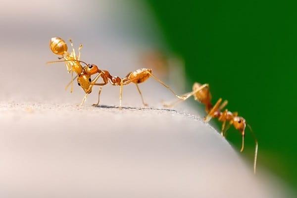 mrówki wdomu, mrówki nabalkonie, mrówki wkuchni, jak się pozbyć mrówek, jak się pozbyć mrówek wmieszkaniu, jak się pozbyć mrówek domowymi sposobami, jak się pozbyć mrówek zsamochodu, jak się pozbyć mrówek wpokoju