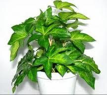 kwiaty wsypialni, rośliny dosypialni, dekorowanie wnętrz, urządzanie sypialni, zdrowe rośliny nasen
