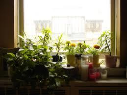 jak ustawić rośliny wmieszkaniu, kwiaty wpomieszczeniach, rozmieszczeni kwiatów, rośliny wpokoju, kwiaty wmieszkaniu