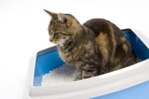 załatwianie dokuwety, kot się niezałatwia dokuwety, załatwianie poza kuwetą, kot niesika dokuwety