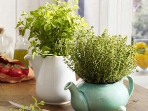 Jak uprawiać zioła wdomu, gdzie sadzić zioła, jak podlewać zioła,ziemia doziół, jak przycinać zioła