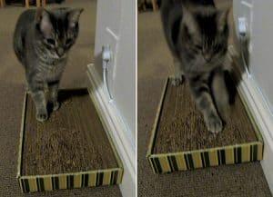 Drapak dla kota zrobiony zkartonu