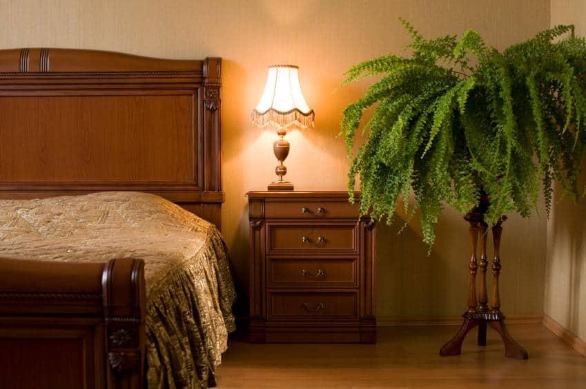 kwiaty doniczkowe wsypialni, rośliny doniczkowe wsypialni, jakie rośliny dosypialni, rośliny produkujące nocą tlen