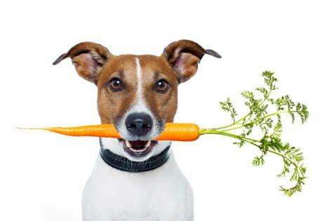 jak karmić psa, czym karmić psa, co dawać psu, czego niemoże pies jeść, jak gotować dla psa, pies czekolada, kości dla psa, pies odchudzanie