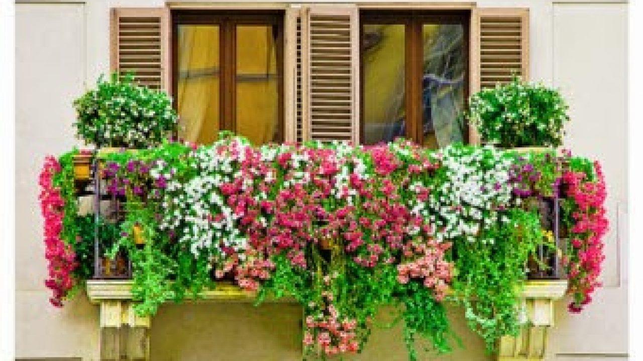 Jakie Kwiaty Wybrać Na Balkon