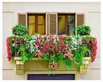 rośliny nabalkonie, jak uprawiać rośliny, hodowla nabalkonie,rośliny doniczkowe, kwiaty, balkon,rośliny domieszkania