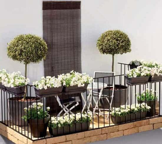 kwiaty nabalkon,rośliny nabalkonie, jak uprawiać rośliny, hodowla nabalkonie,rośliny doniczkowe, kwiaty, balkon,rośliny domieszkania