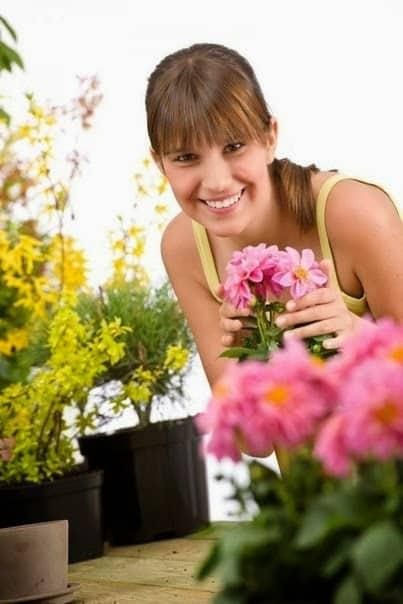 nawożenie roślin doniczkowych, jak nawozić rośliny ikwiaty, uprawa roślin, naturalne nawożenie roślin doniczkowych, nawożenie kwiatów iroślin doniczkowych, nawożenie roślin wmieszkaniu, nawożenie roślin ikwiatów ozdobnych, nawożenie kwiatów skórki odbanana, nawożenie kwiatów skorupki