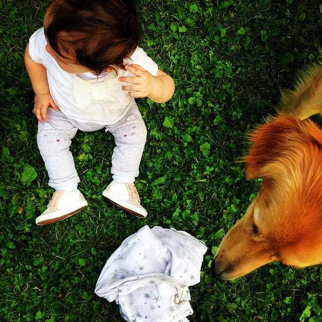 dziecko ipies, zachownie psa przy dziecku, wychowanie psa naprzyjście dziecka, pies idziecko wdomu, pies inoworodek, pies imałe dziecko, pies iniemowle