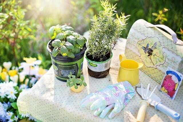 Rośliny nawiosnę