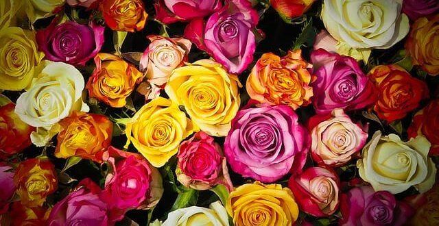 Kolory kwiatów