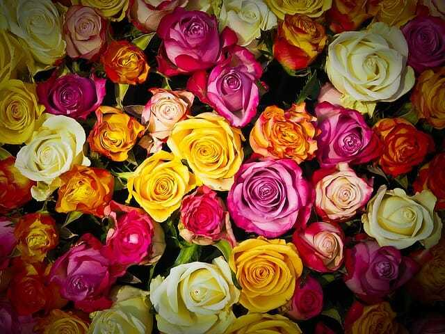 Jakie znaczenie mają kolory kwiatów?
