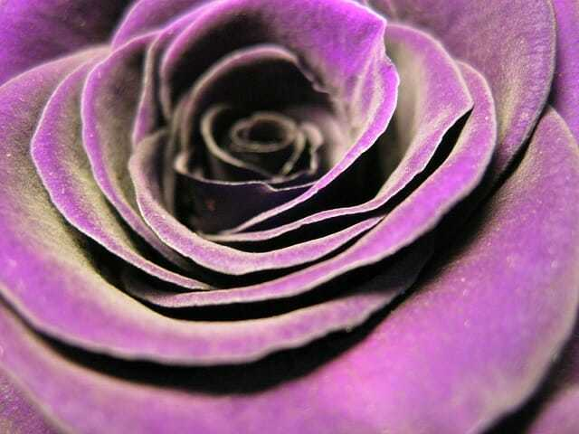znaczenie kolorów kwiatów